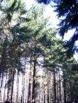 Baum holen 09.JPG