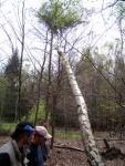 Baum holen 41.JPG